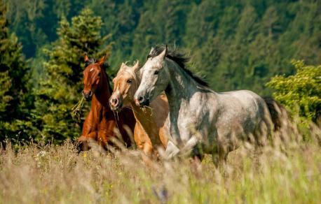 Rimsko doživetje s konji
